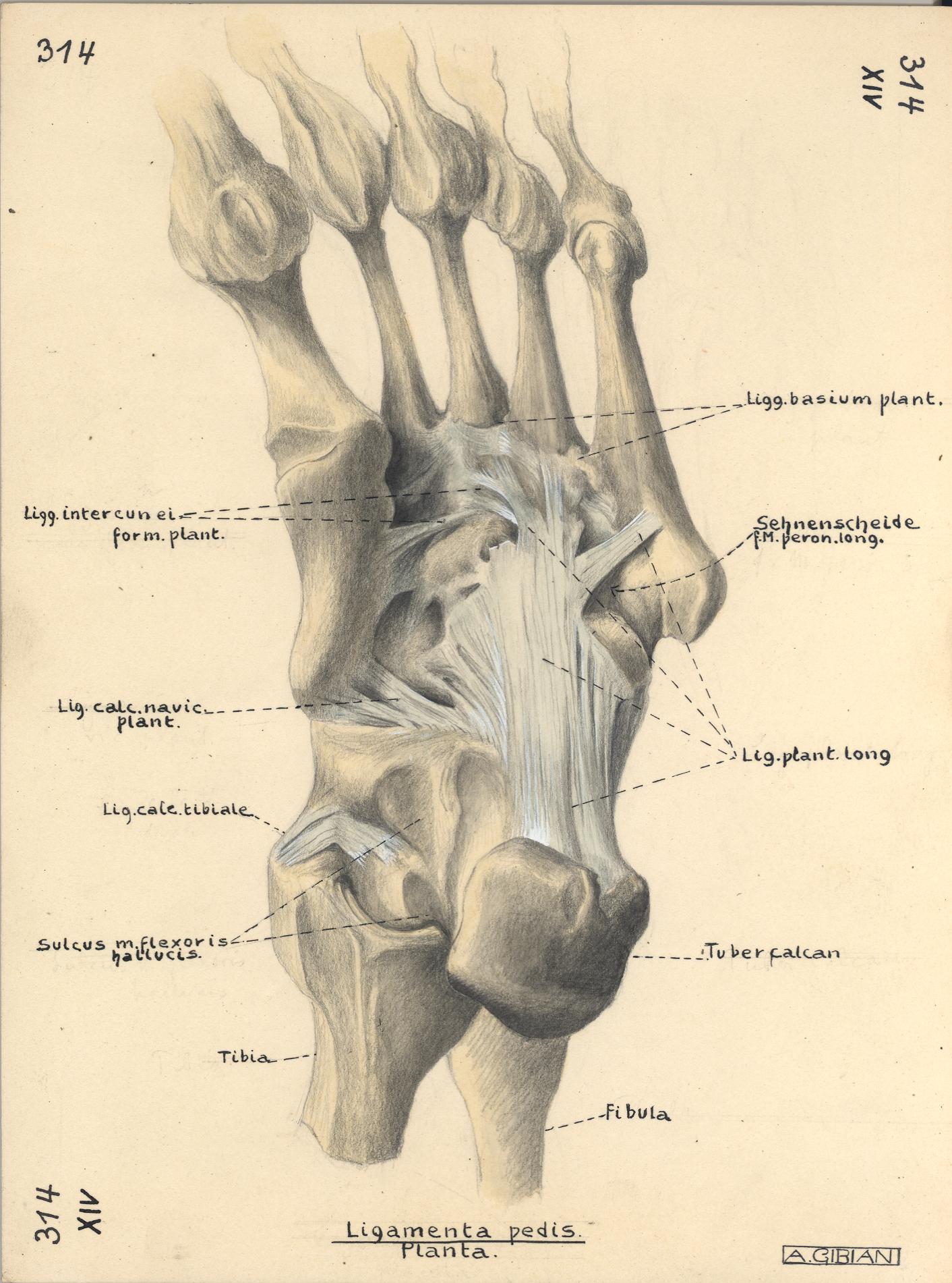 Niedlich Ultraschall Bauch Anatomie Galerie - Anatomie Ideen ...
