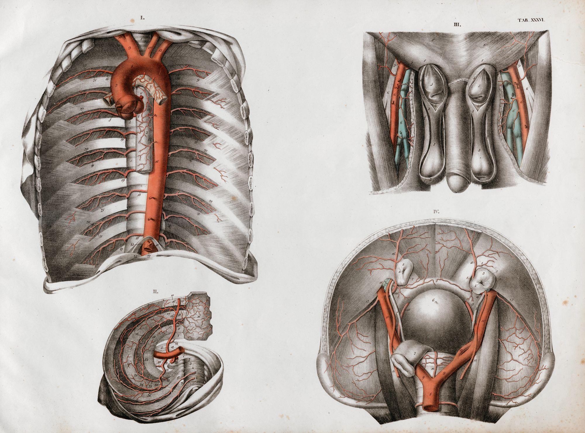 Ziemlich Wrangler Anatomie Eines Symbols Zeitgenössisch - Anatomie ...