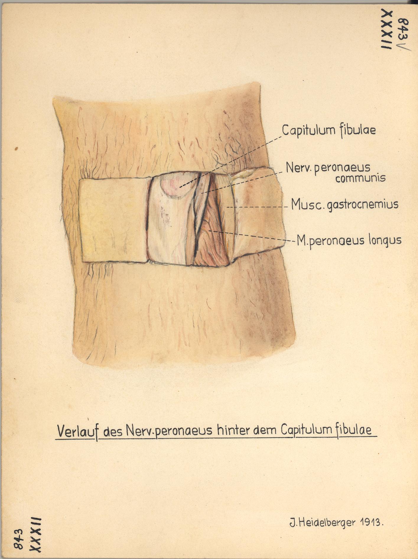 HeidICON: Bein, Nerven 1